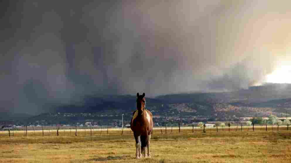 A horse stands in the middle of a field as the Wallow fire approaches in Springerville, Ariz., on Tuesday.