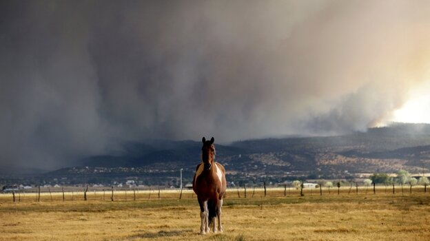 A horse stands in the middle of a field as the Wallow fire approaches in Springerville,