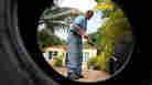 Tropical Disease Buzzes Back Into U.S.