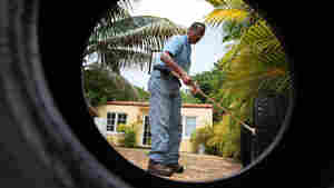 Lawrence Smart of Miami-Dade Mosquito Control looks for mosquito larvae in vehicle tires where water has collected, July 2010.