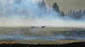 Wildfire Season Already Worse Than Last Year