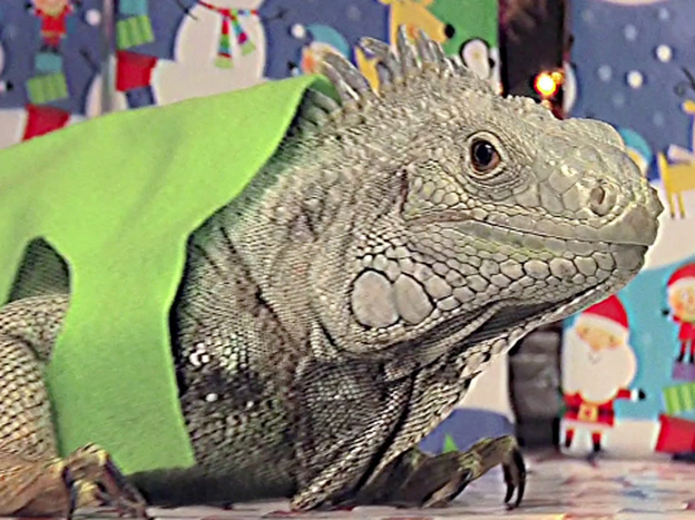 "An iguana poses as Theodore from <em>Alvin and the Chipmunks</em> in the 17th episode of <em>Everything,</em><em></em> Channel 101's longest running <a href=""http://www.channel101.com/shows/primetime.php"">prime-time show</a>."
