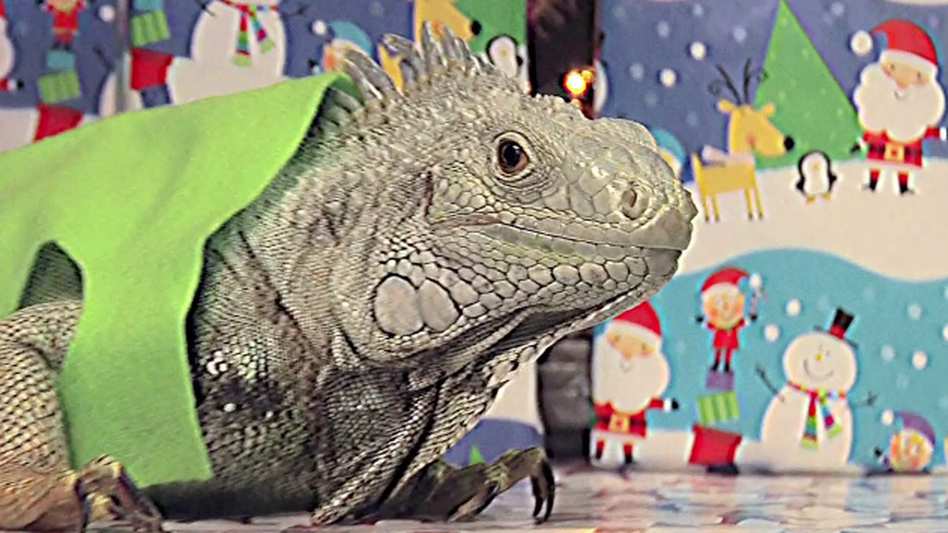 """An iguana poses as Theodore from <em>Alvin and the Chipmunks</em> in the 17th episode of <em>Everything,</em><em></em> Channel 101's longest running <a href=""""http://www.channel101.com/shows/primetime.php"""">prime-time show</a>."""