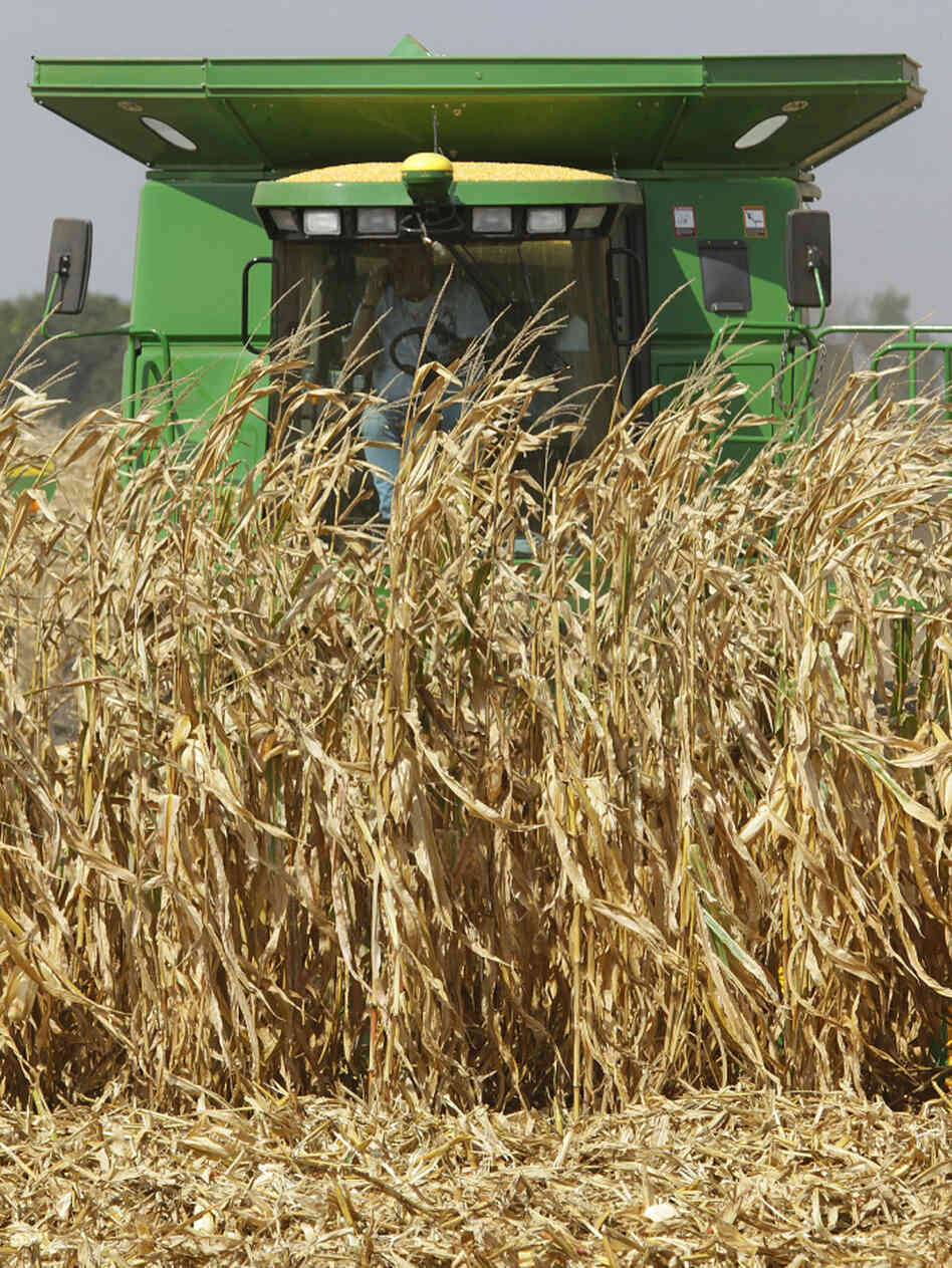 Central Illinois farmers harvest their corn crops near Monticello, Ill., September 2010.