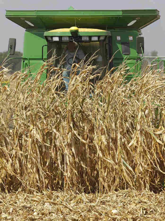 Central Illinois farmers harvest their corn crops near Monticello, Ill., September 2010.