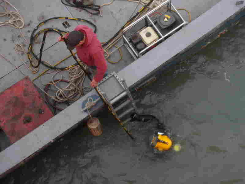 Chad Stephens helps diver Tom Warvell recover an ice sensor from the bottom of Lake Erie. The two are part of a company (specializing in underwater recovery) working with engineers studying how ice floes during the winter would affect the foundation of a lake-based wind turbine.