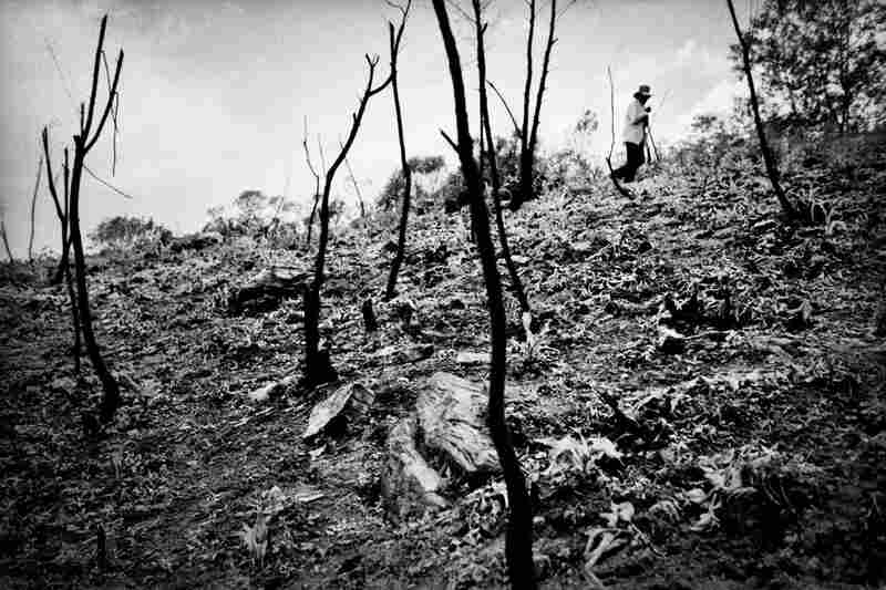 A farmer surveys a cleared and burned hillside in preparation for planting corn near the village of San Miguel Cuevas.
