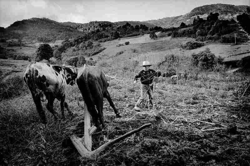 A farmer works with a plow team in his field.