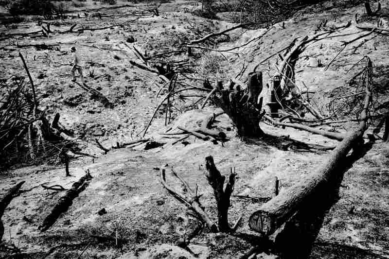 A farmer inspects a burned field in prepartion for planting corn.