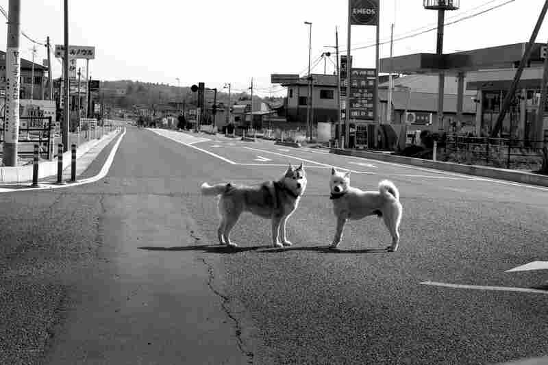 Dogs roam in a deserted city. In the wake of the disaster, many in Japan are calling for economic and political reforms.