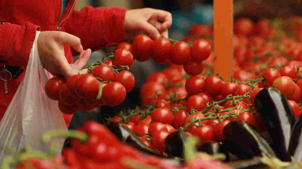 Original varieties of tomatoes from South America are believed to have been small, like today's cherry tomatoes. Today's large, plump tomatoes are the result of years of selection.
