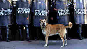 Loukanikos paused in front of riot police in central Athens on December 8, 2010.