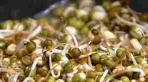 Fenugreek sprouts like these may be the launching pad for recent outbreaks of illness from E. coli in Europe.