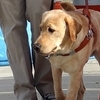 Guide dog mobility instructor Adam Waskow in a training session.