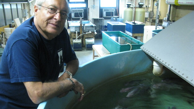 Martin Schreibman with a few of his tilapia friends in his Brooklyn  lab. (NPR)