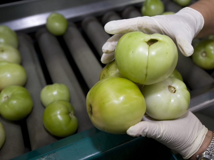 Tomatoes which failed quality control are discarded at a factory in Palmetto, Fla. The Sunshine State produces one-third of all fresh tomatoes in the U.S.