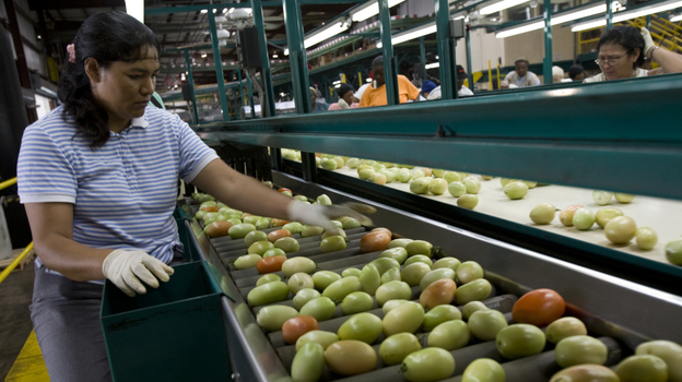 A worker inspects tomatoes at the West Coast Tomato plant in Palmetto, Fla. The Sunshine State produces one-third of all fresh tomatoes in the U.S. (Getty Images)