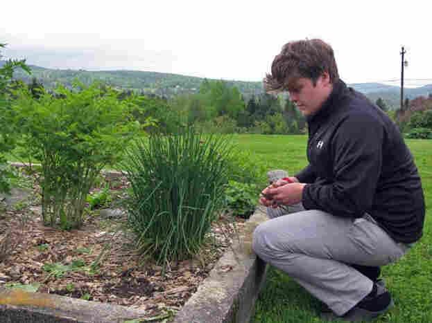 Finn Kane, a high school student, picks some things for dinner in his family garden outside East  Hardwick.