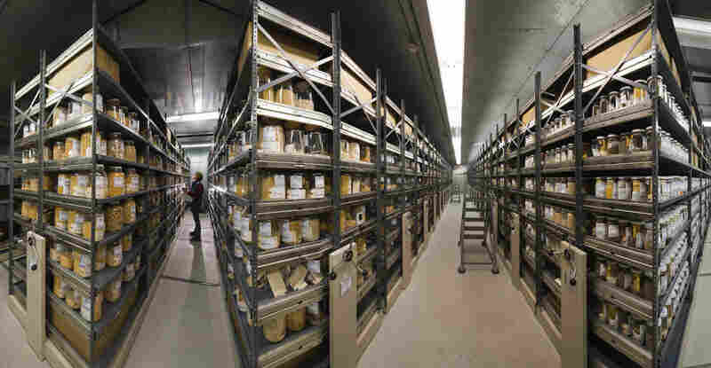 A photo composite shows the vast shelves of a seed bank in Ames, Iowa, organized much like those in a library. Each genetically distinct variety of seed is meticulously tracked and maintained.