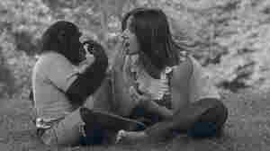 'Project Nim': A Chimp Learns, And Humans Don't