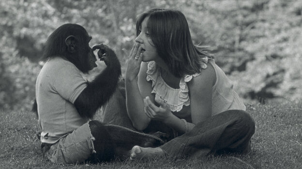 """Sign Of The Times: Nim Chimpsky (left) was taught sign language by Columbia University researchers, including student Laura-Ann Petitto, as part of an experiment to prove that nonhumans could learn language. Ultimately, though, the study served to exhibit the failings of his """"teachers."""""""