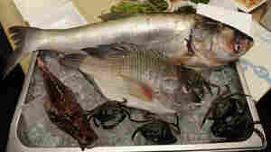 To Save A Fish, Eat Asian Carp Or Lionfish