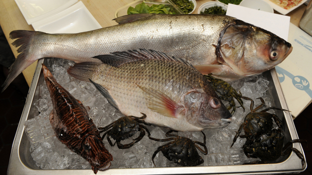 Salty invasion: Asian carp (top), wild tilapia, lionfish, and European green crabs at a James Beard House event on Wednesday.