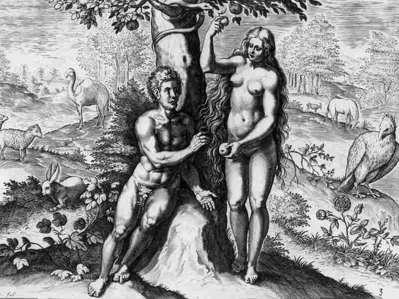 Eve offers Adam the fruit in the garden of Eden in Theatrum Biblicum, a drawing by Johann Fischen (circa 1650). Sex lets a species evolve faster to rapidly adapt to a new environment, researchers say.