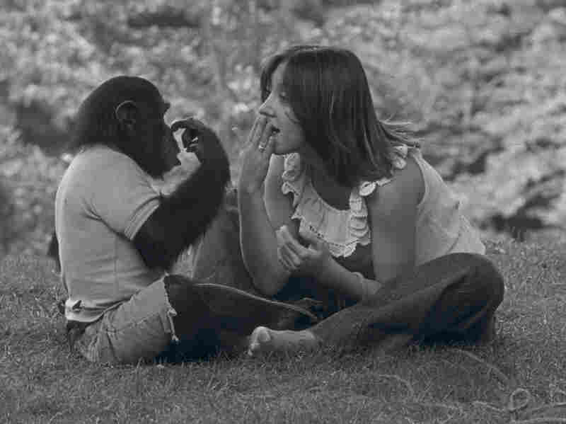 Nim Chimpsky (left) was taught sign language by Columbia University researchers, including student Laura-Ann Petitto, as part of an experiment to prove that animals could learn language.