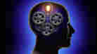 'Brain Bugs': Cognitive Flaws That 'Shape Our Lives'