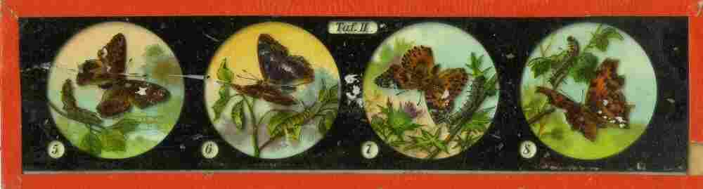 These 19th-century magic lanterns might have been used in a lecture. Each image would have been projected as the operator pushed the slide through the magic lantern projector. The images are photographs of drawings that have been hand-colored.