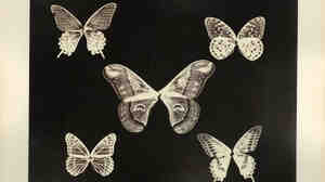 Thomas Gaffield (1825-1900) investigated the patterns on the wings of the butterflies (notice the bodies are missing). He was well aware that various chemical compositions in manufactured glass caused changed color overtime and sug