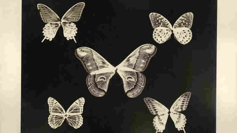 From Smithsonian: Butterflies, Just Because