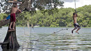As Florida temperatures hover in the 90's, boys use a swing rope to cool off in the Suwannee River near Chiefland, Fla.