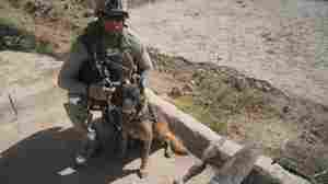 Military Dogs Enjoy Brighter Future After Service