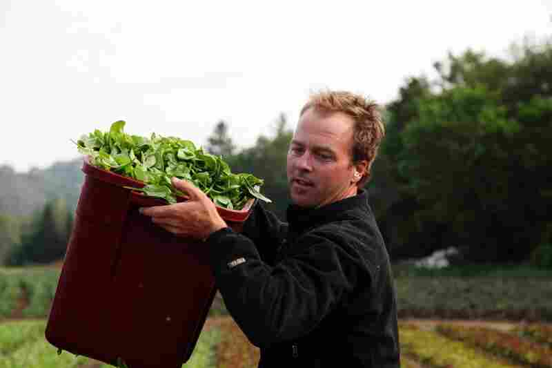 Pete Johnson has been growing and selling greens since he was a teenager. He now owns and runs Pete's Greens.