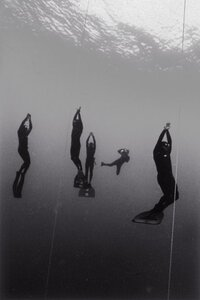 Surfacing Freedivers