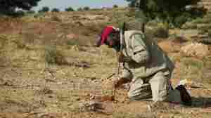 Milad Saadi clears the dirt around a brick of plastic explosives that he discovered lying on top of a T-AB-1 anti-personnel mine.