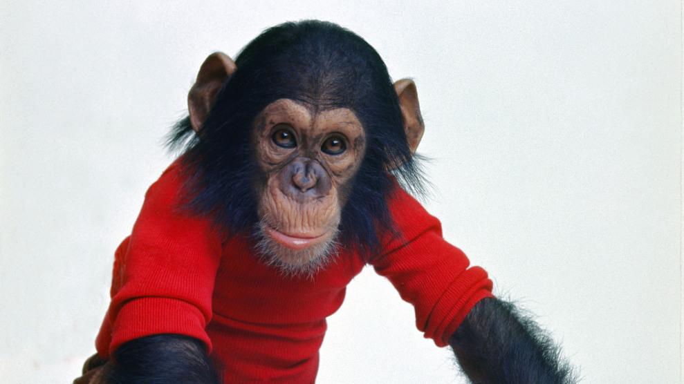 project nim a chimps very human very sad life npr