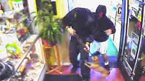 MUST-SEE VIDEO: Chihuahua Chases Armed Robbers Out Of California Shop
