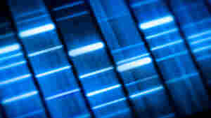 Image of a DNA sequencing gel.
