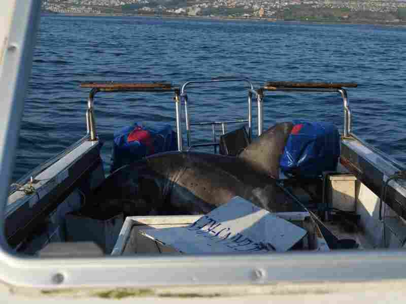 A great white shark jumped on a boat off the coast of South Africa.