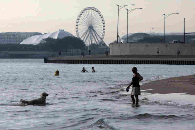 A dog takes an early morning dip on the shore of Lake Michigan on Wednesday in Chicago.
