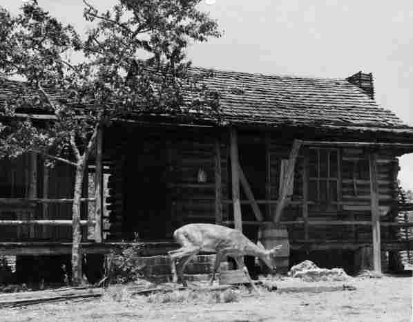 A deer near Forrester Place farm in Florida, photographed in 1940 during pre-production and location scouting for the MGM film The Yearling.