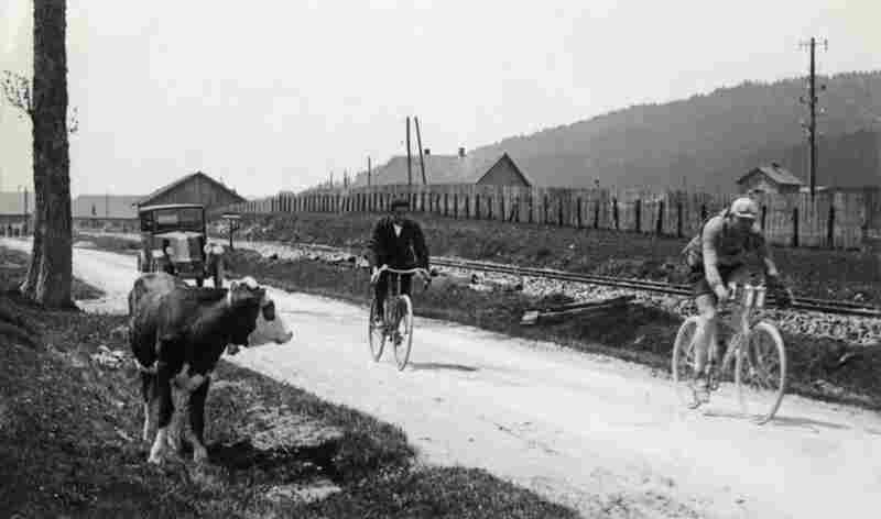 Cyclist Lucien Buysse passes a cow during the 1926 Tour de France, which he later went on to win. This was the longest race since the Tour de France started in 1903, totaling about 3,569 miles.