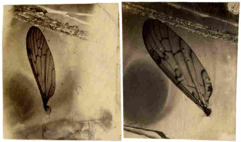 This is a sample of one of Peale's salt paper experiments.
