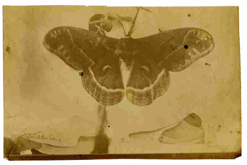 Titan Ramsay Peale (1799-1885) was an American artist, entomologist and photographer.