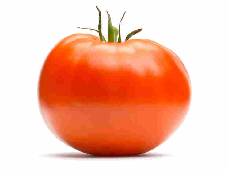 South Florida grows most of the tomatoes used in food service and sold in grocery stores.