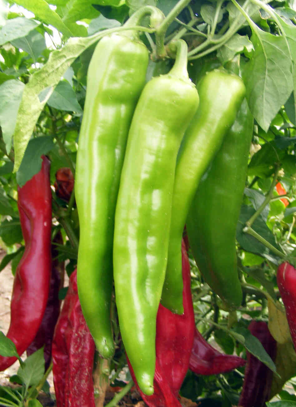 It S Law There S No Green Chili Like A New Mexico Green