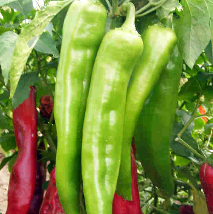 New Mexico chili peppers are distinct, but locals in the pepper industry have been struggling to compete with the foreign pepper market. A new state law requires that only New Mexico-grown peppers are labeled as such.